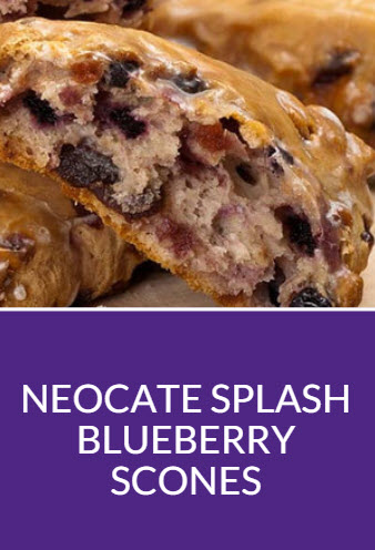 Neocate Splash Blueberry Scones Recipe