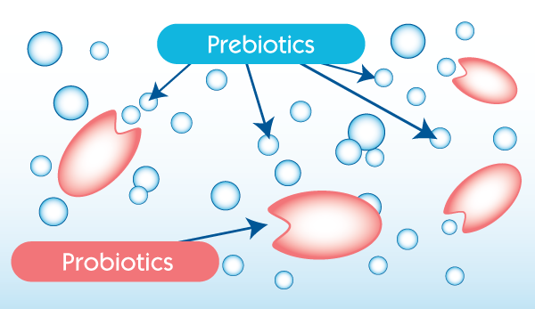 Pre and Probiotics Microbiota